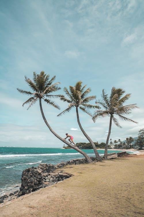 Free stock photo of beach, coconut, exotic