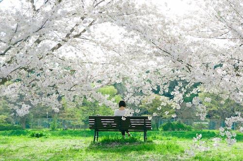 Immagine gratuita di albero, ambiente, apple