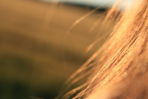 Kostnadsfri bild av blond, hår, närbild, oskärpa
