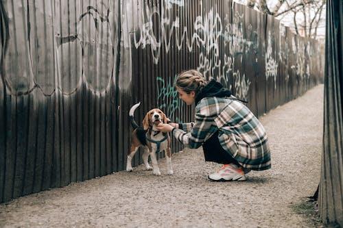 Fotos de stock gratuitas de adulto, amor, animal