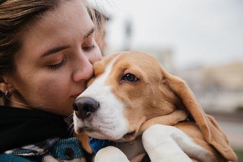 Fotos de stock gratuitas de adorable, afecto, amante de los animales