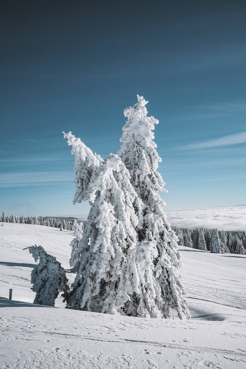 Snow Covered Tree Under Blue Sky