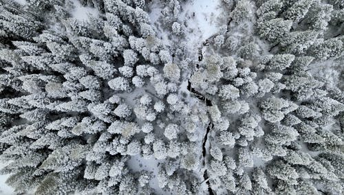 White and Green Tree Covered With Snow