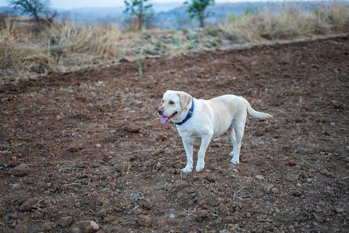 Ilmainen kuvapankkikuva tunnisteilla eläin, eläinkuvaus, koira