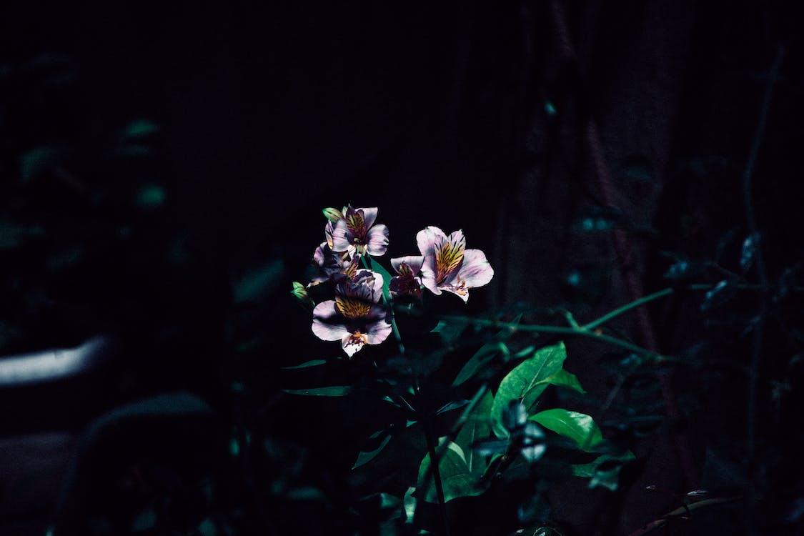 artificial flowers, beautiful flowers, dark green