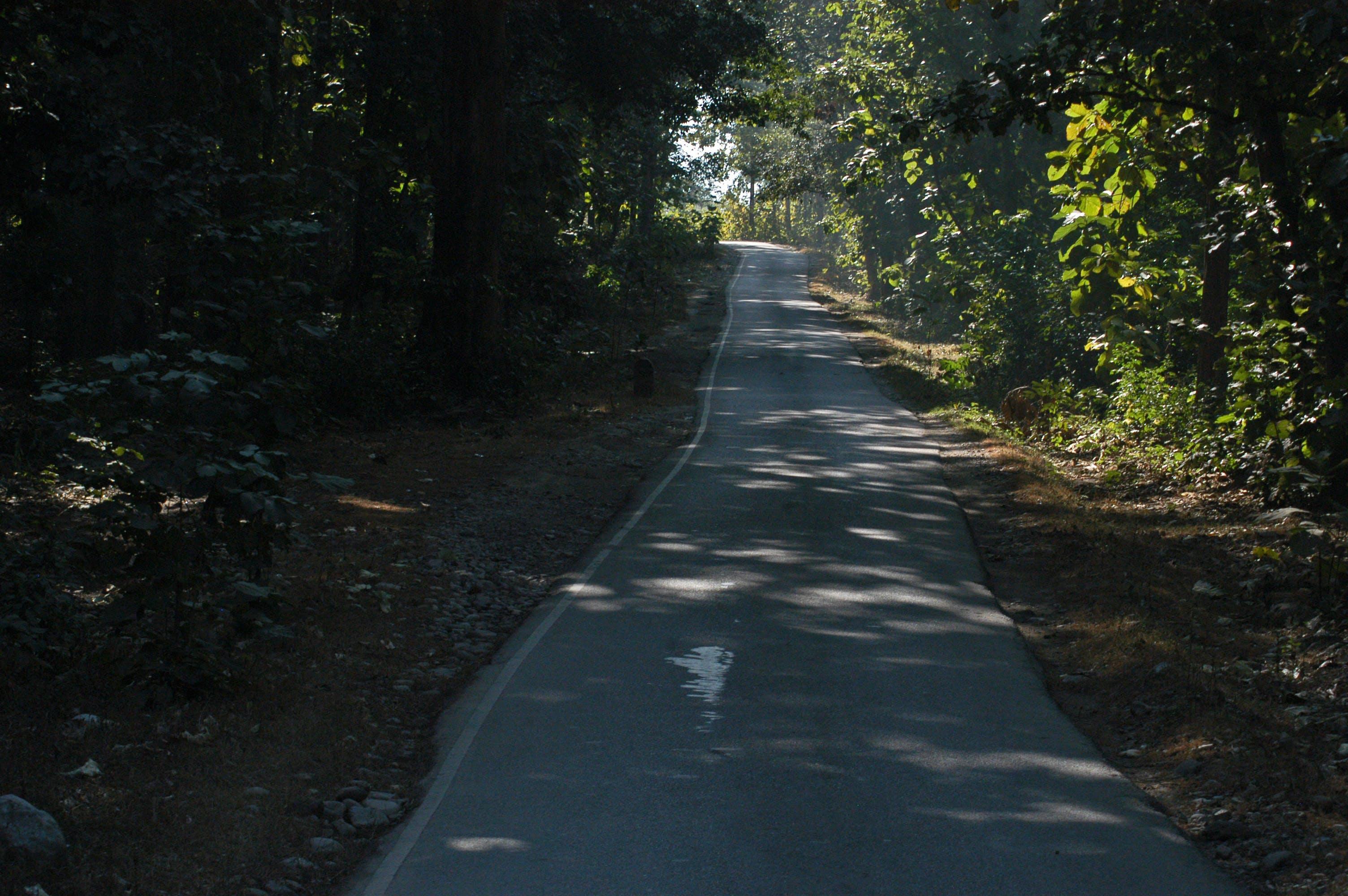 Free stock photo of chikliya range, forest, himalayas, india