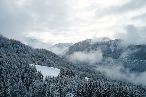 Kostenloses Stock Foto zu alpen, baum, berg