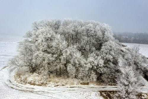 White Trees Covered With Snow