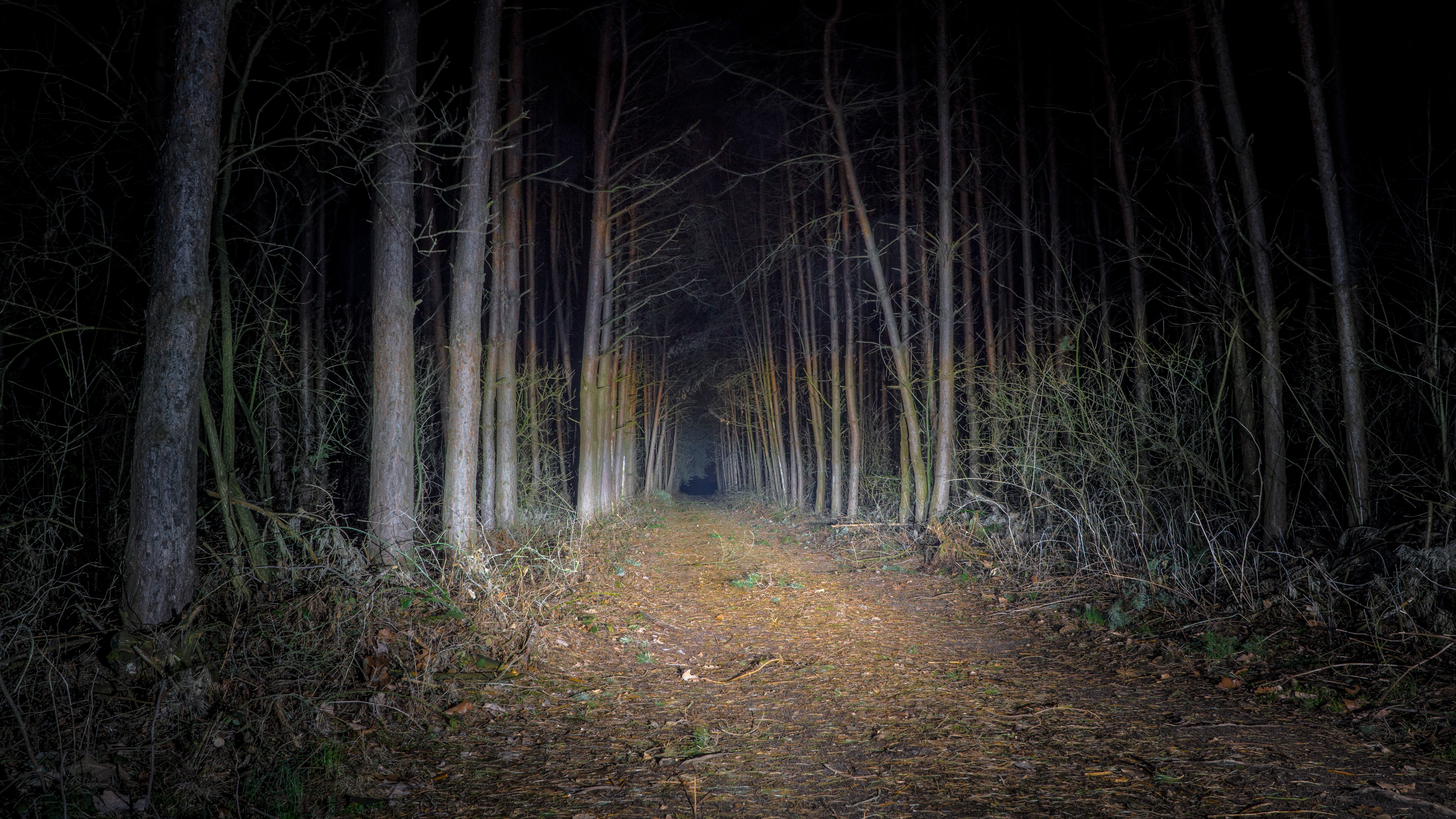 free stock photo of forest nature night