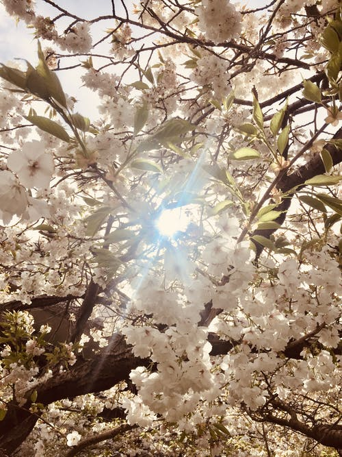 Free stock photo of blossoms, flowers, sunshine