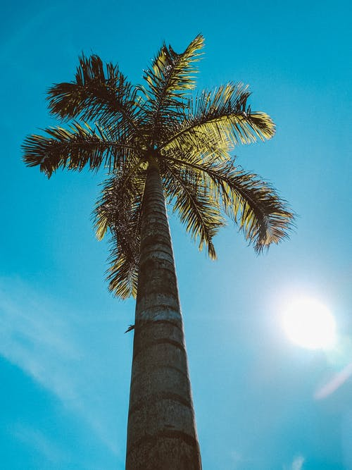From below of tall palm tree with lush wavy leaves under glowing sun in cloudy sky
