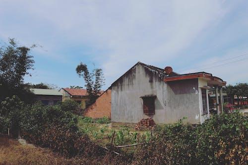 修剪花草, 國家, 屋頂, 平房 的 免费素材照片