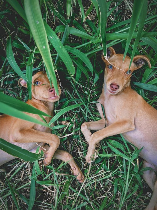 Hound dogs resting on grass in summertime