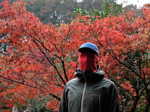 Ảnh lưu trữ miễn phí về lá rơi, màu đỏ, tâm linh, vô danh