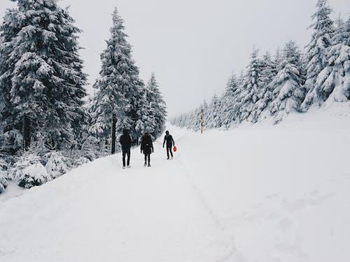 Man on Black Jacket Walking on Snow
