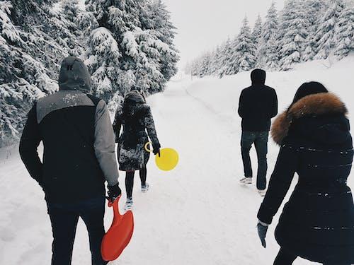감기, 겨울, 겨울 옷, 경치의 무료 스톡 사진