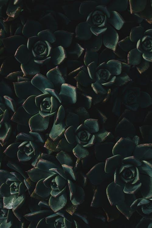 Fotos de stock gratuitas de abstracto, botánico, cactus