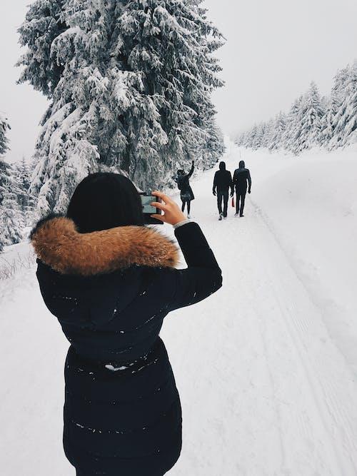 Kostnadsfri bild av dagsljus, fotograf, frost, frostig