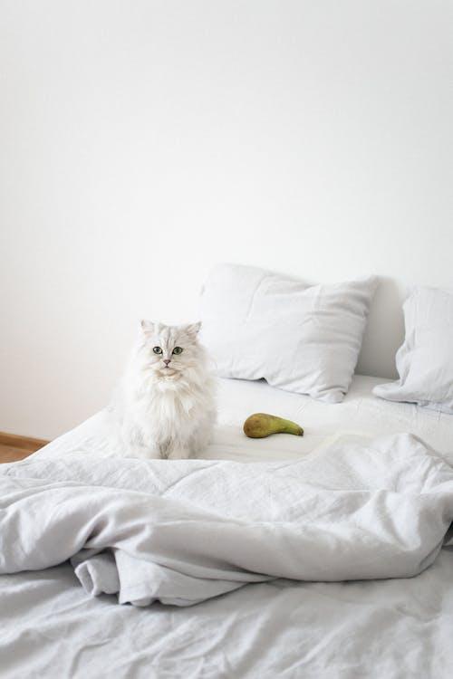Бесплатное стоковое фото с кровать, подушка, спальня