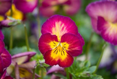 Free stock photo of flower, garden, spring