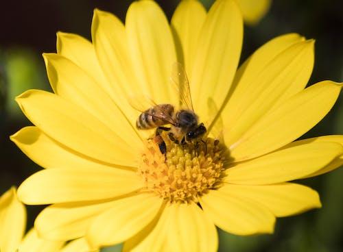 Free stock photo of bee, flower, garden