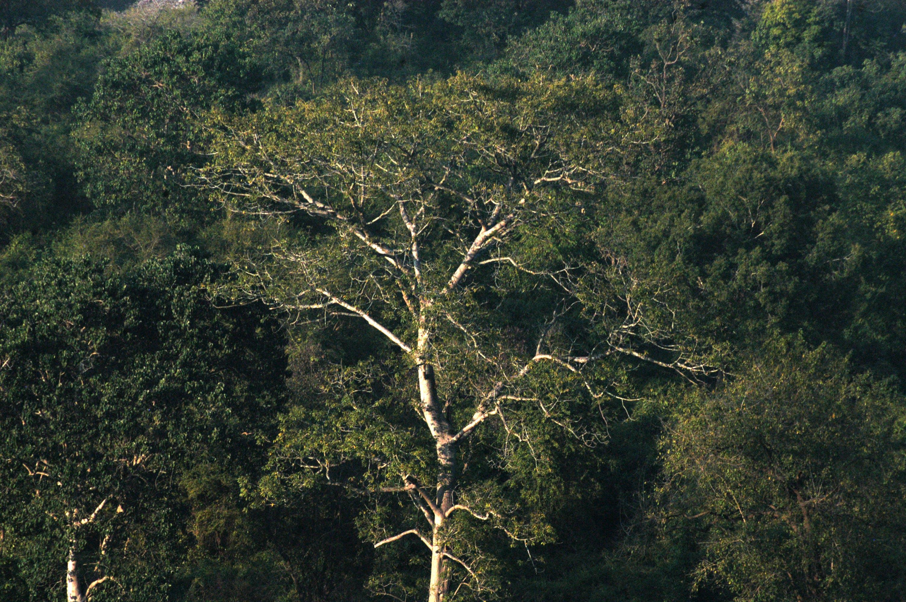Δωρεάν στοκ φωτογραφιών με γραφικός, δασικός, δέντρα, εποχή