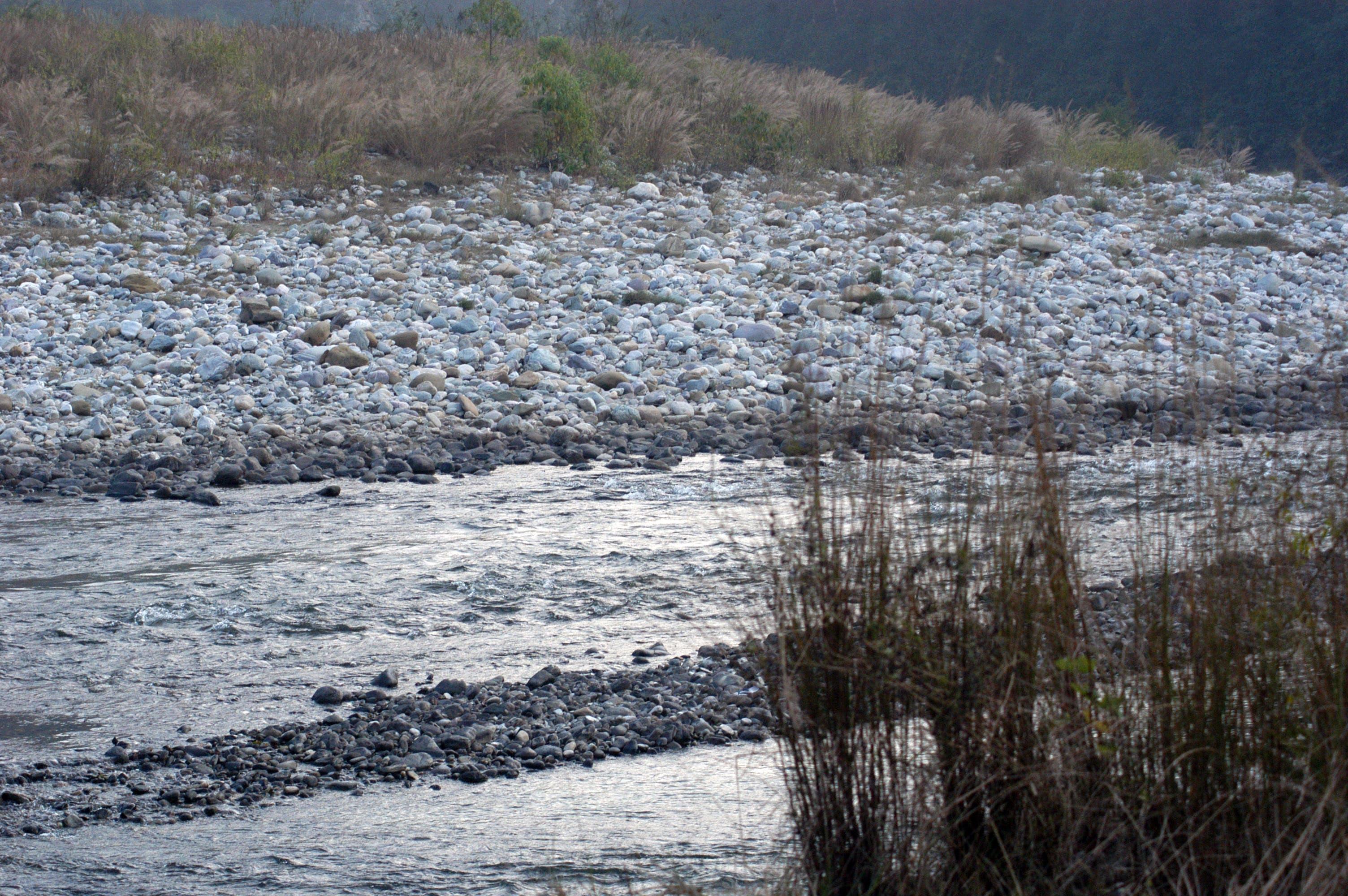 Free stock photo of jim corbett naional park, ramganga river