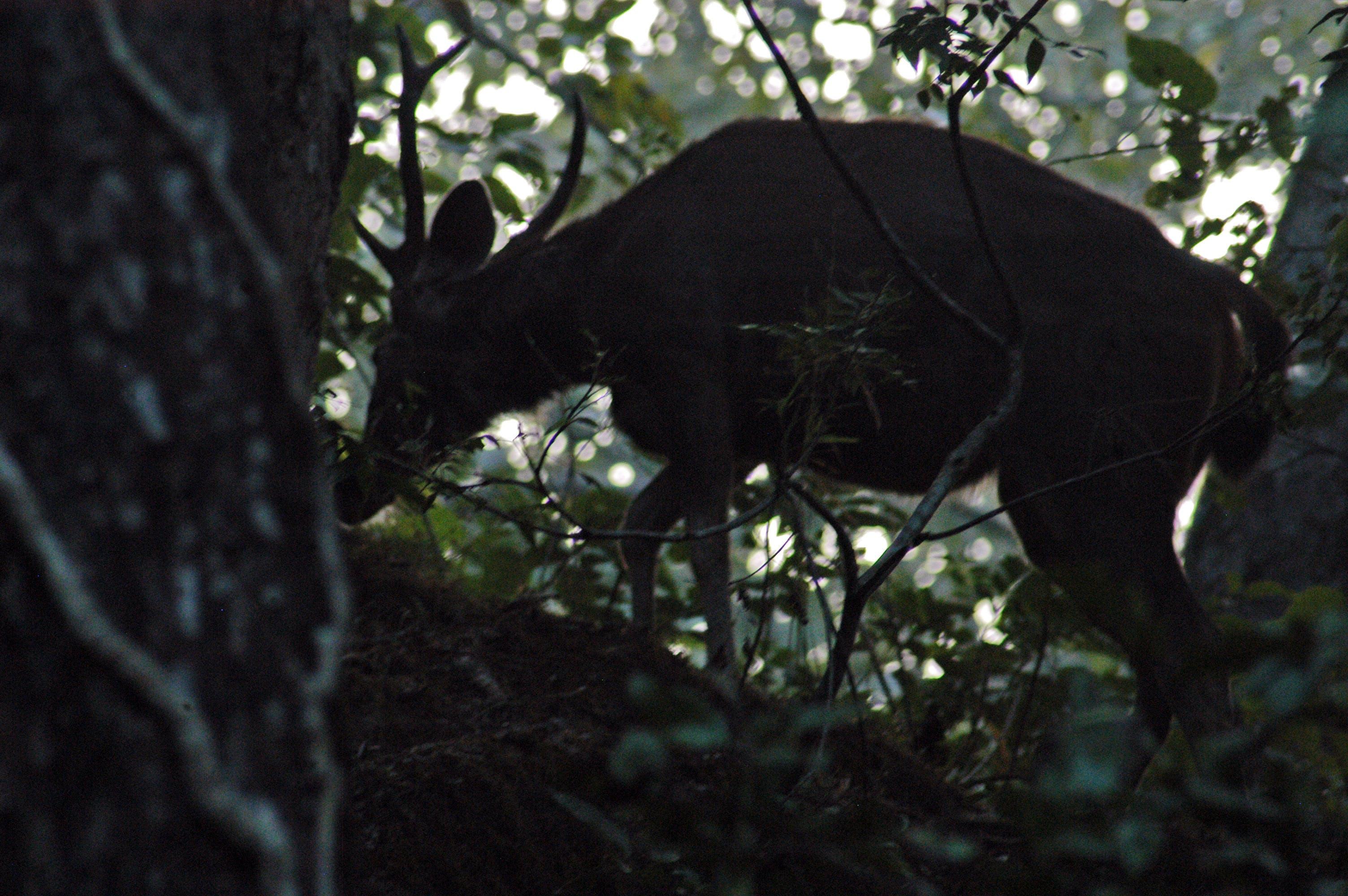 Free stock photo of animal photography, deer, himalayas, india