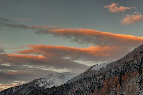 Immagine gratuita di alberi, cielo, congelato, fotografia della natura