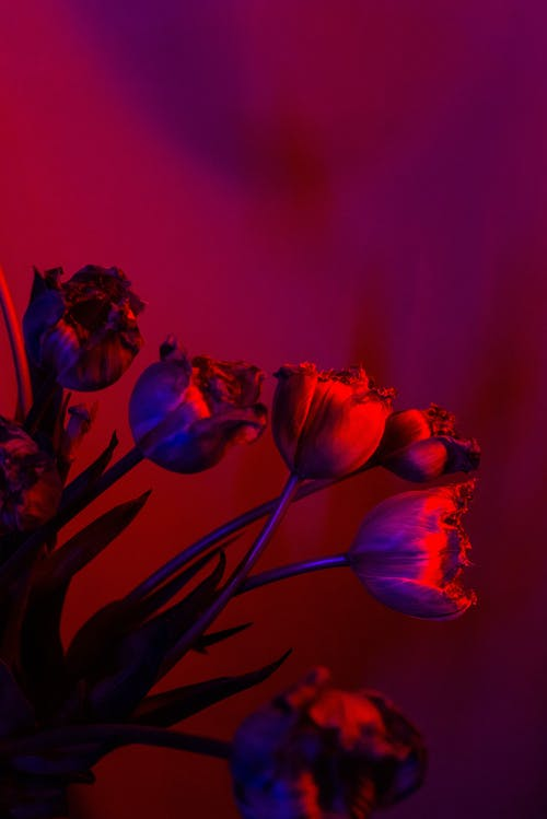 Blooming flowers in red light