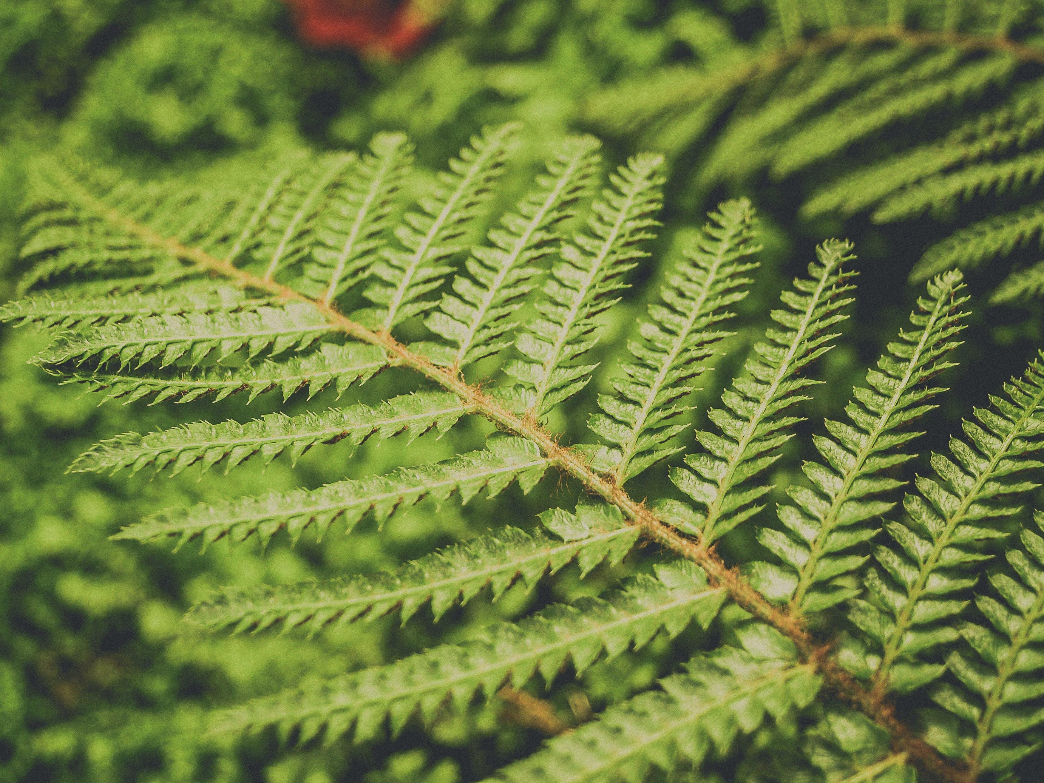Foto profissional grátis de arbusto, aumento, botânico, brilhante
