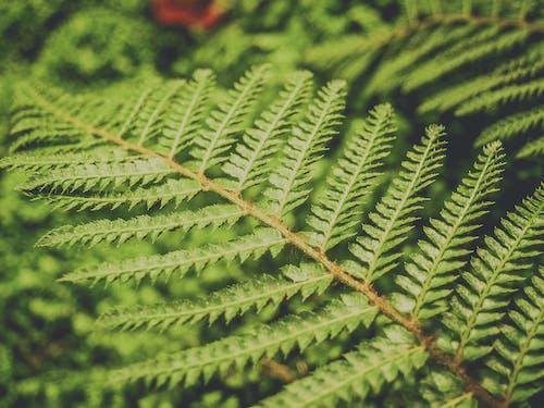 Бесплатное стоковое фото с ботанический, букет, ветвь, декоративный