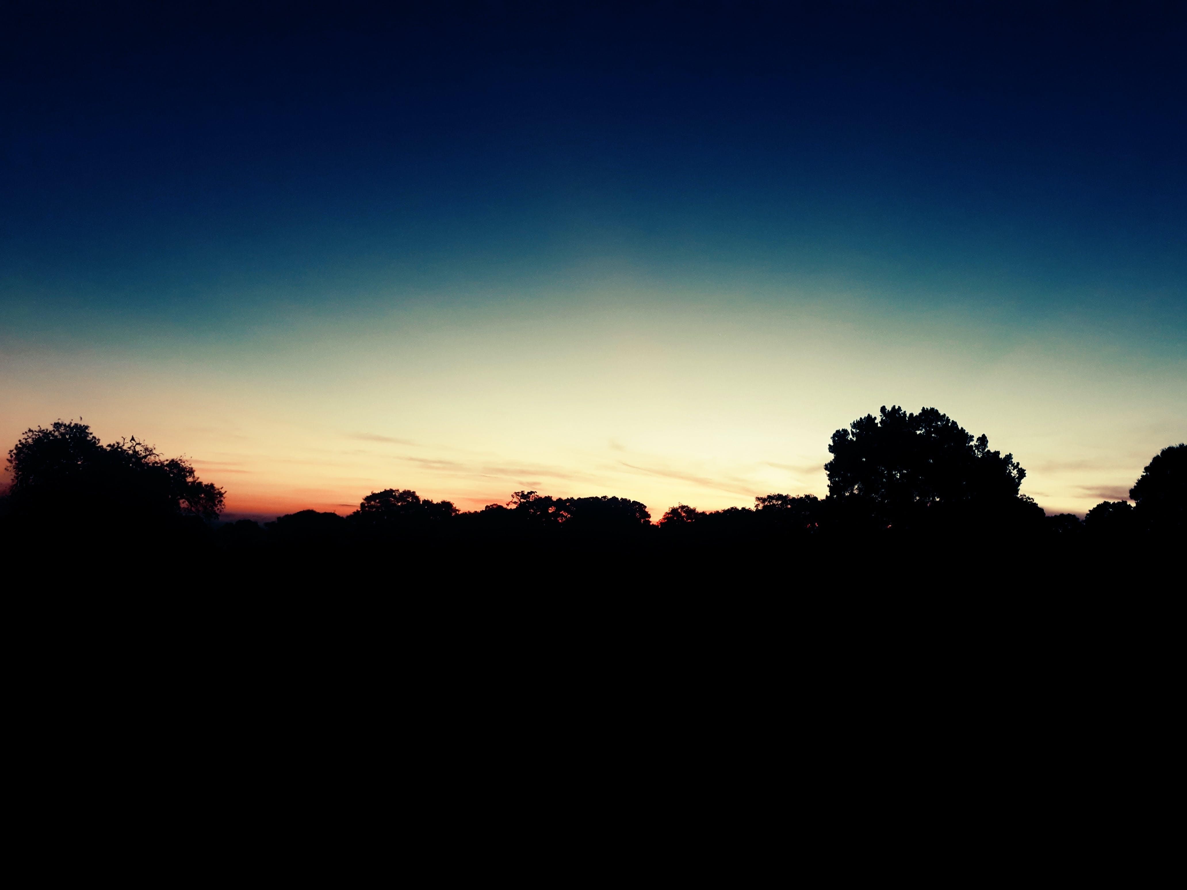 Free stock photo of dawn, silhouette, tree