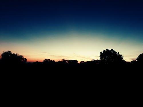 Immagine gratuita di alba, albero