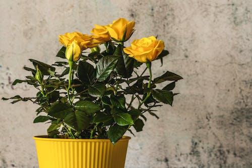 Immagine gratuita di amore, bouquet, crescita