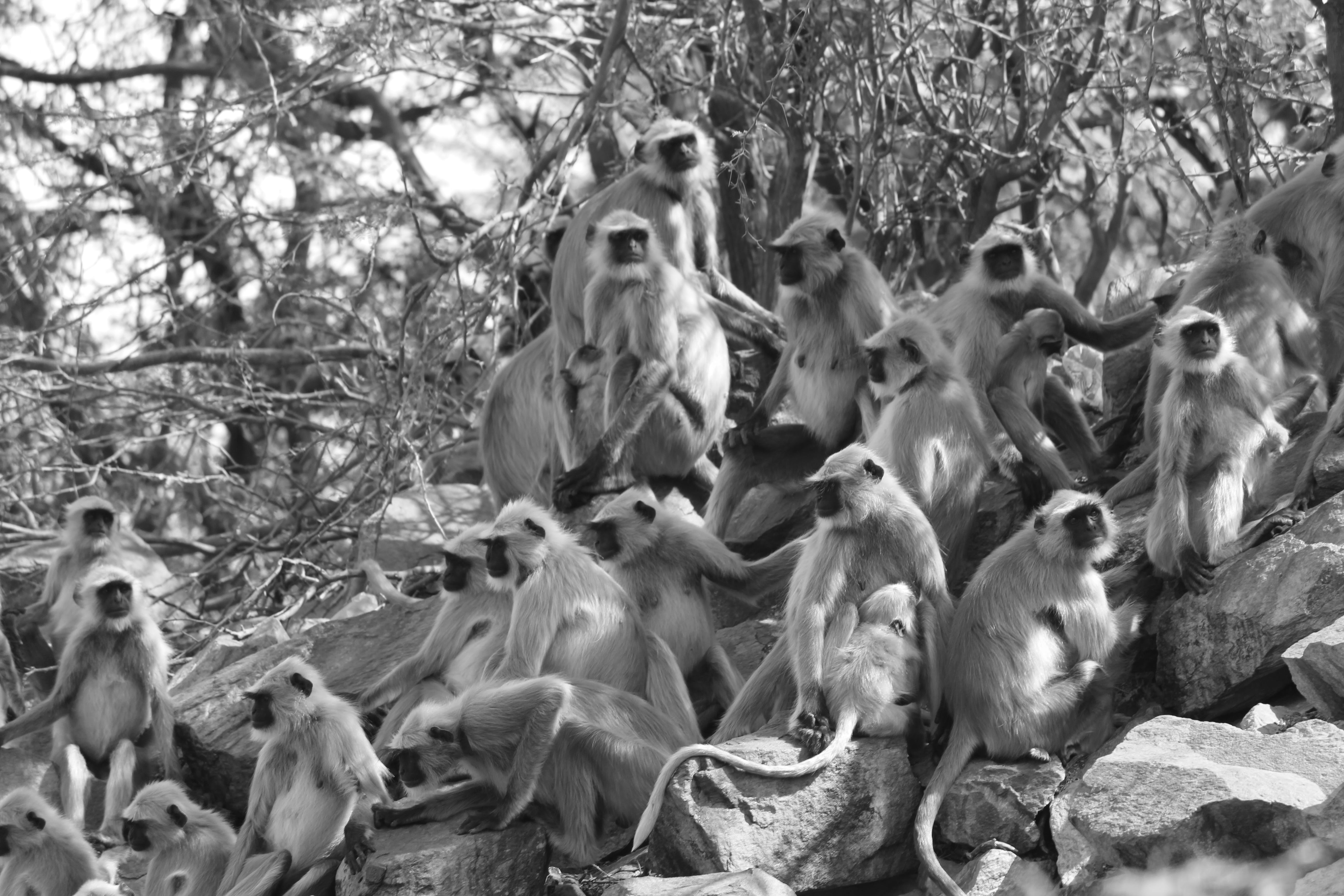 Grayscale Photo of Monkeys