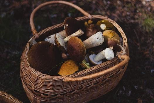 Brown Wooven Basket