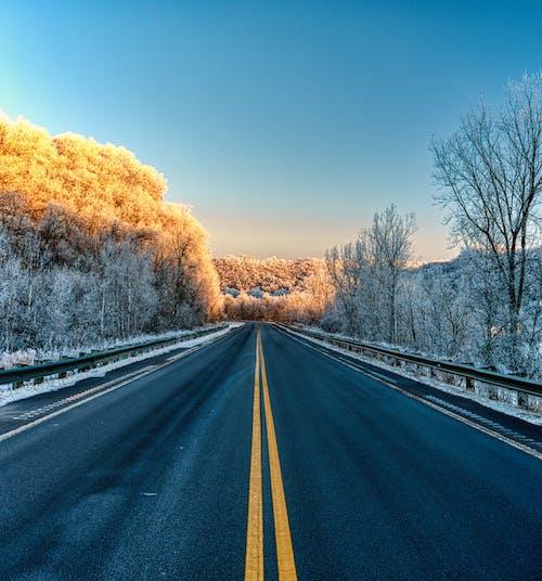 Black Asphalt Road Between Trees