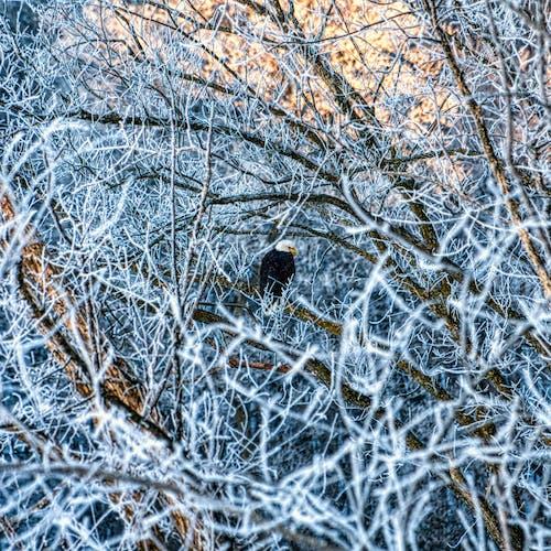 Black Bird on Brown Leafless Tree