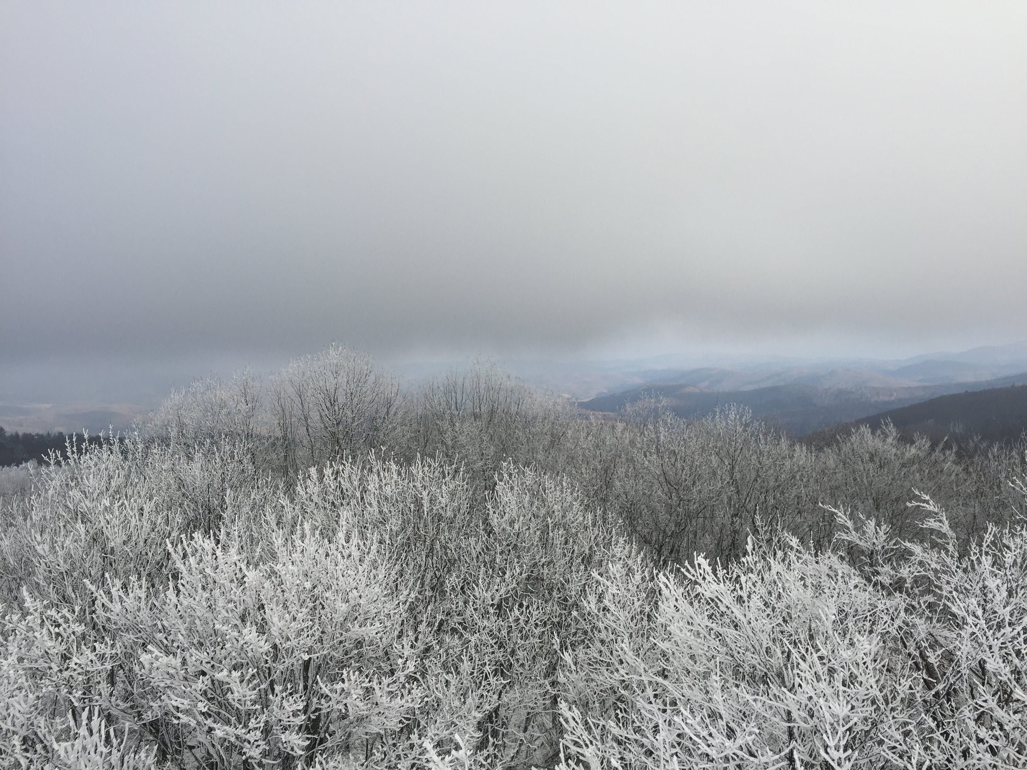 Free stock photo of aerial view, cold, forest, snow