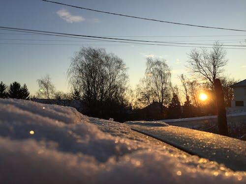Základová fotografie zdarma na téma fotografie přírody, příroda, ranní světlo, zima