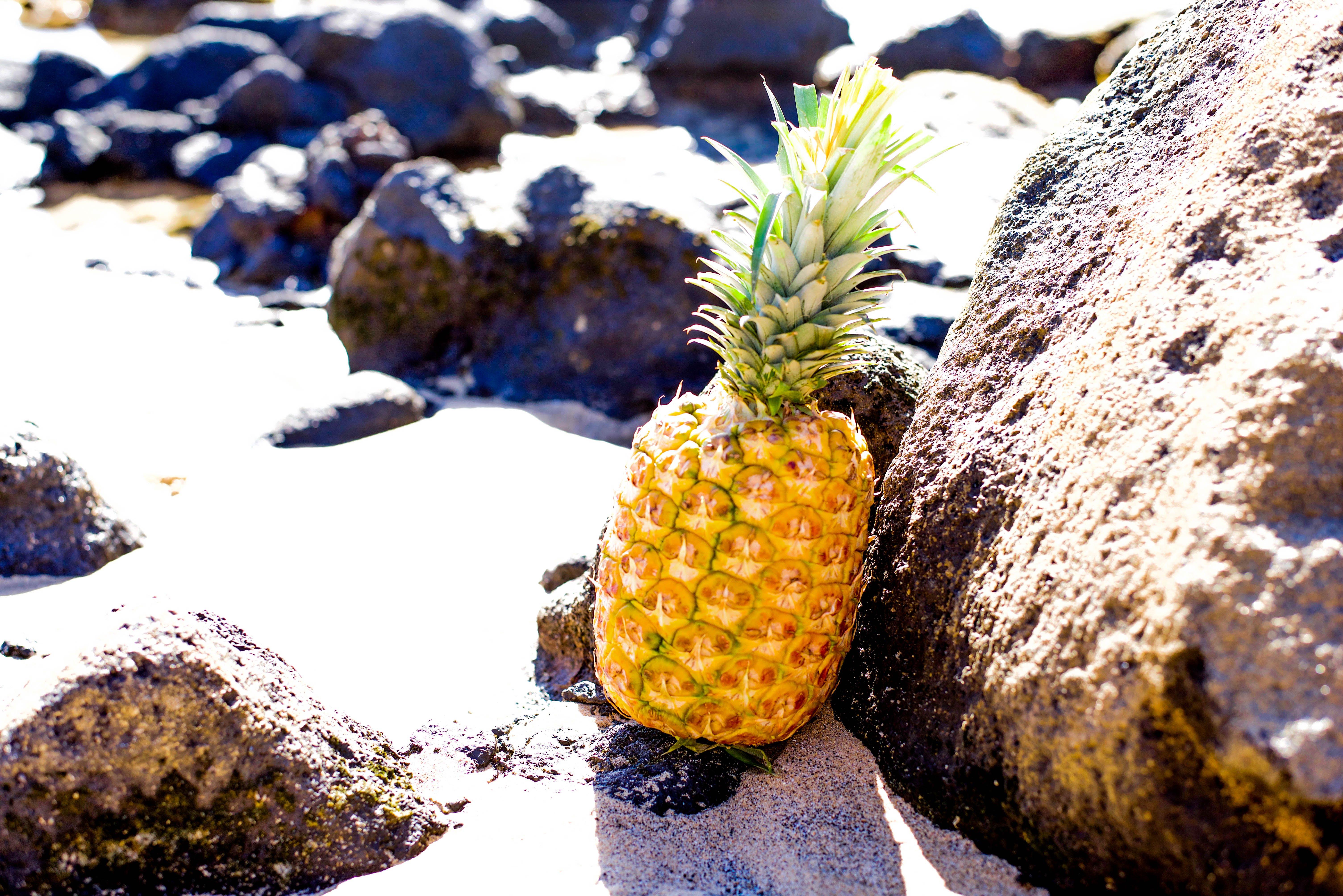Free stock photo of pineapple, rocks