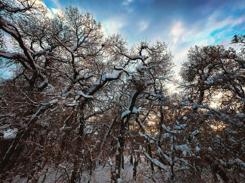 Free stock photo of dusk, sky, snow