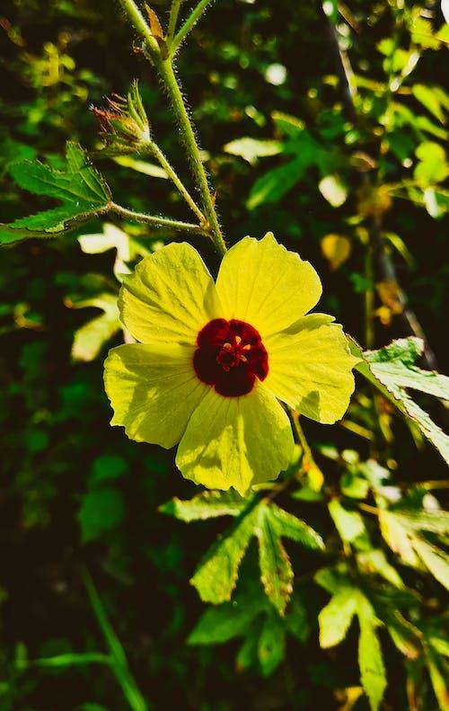 Δωρεάν στοκ φωτογραφιών με αγριολούλουδο, κίτρινο άνθος, κίτρινο κίτρινο