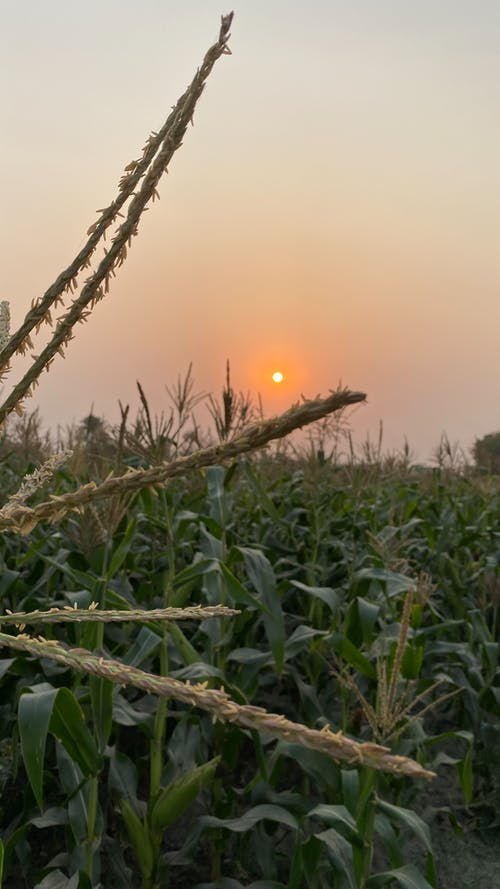 Free stock photo of Beautiful sunset, closeup, easter 2021