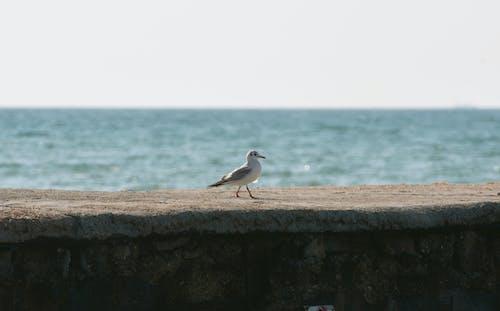 Immagine gratuita di animale, fotografia di uccelli, gabbiano caspico
