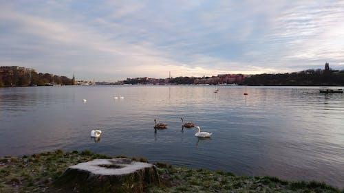 Kostnadsfri bild av fågelflock, lugnt vatten, vinter