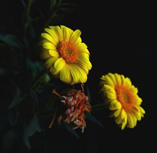 Бесплатное стоковое фото с HD-обои, hdr, апельсин