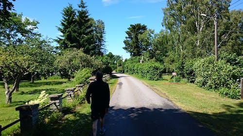 Kostnadsfri bild av blå himmel, sommartid, träd