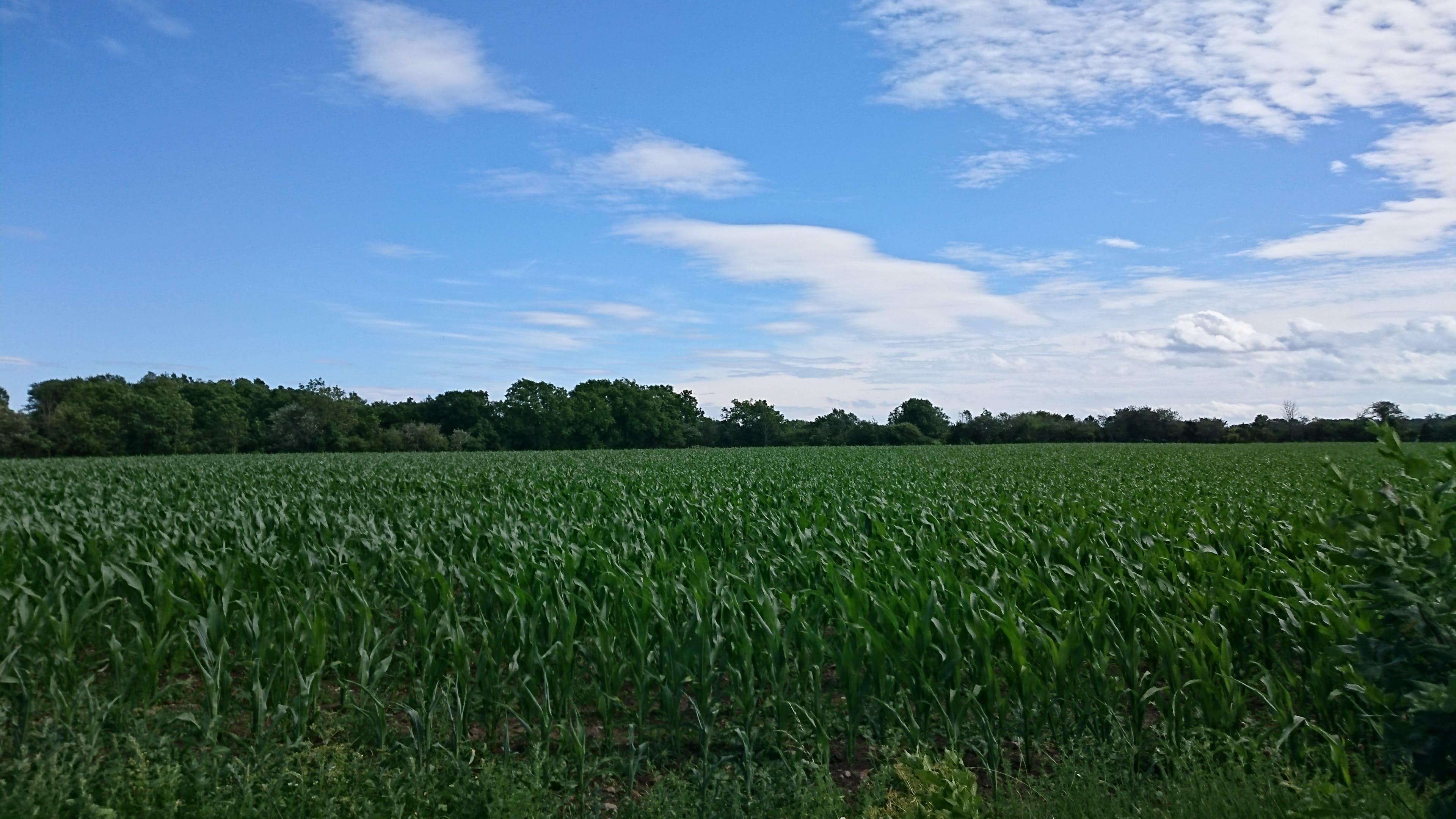 Kostnadsfri bild av beskära, bete, blå himmel, bondgård